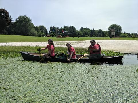 Three crew members in a kayak in a lake covered with water chestnut