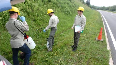 Three workers preparing to spray herbicide