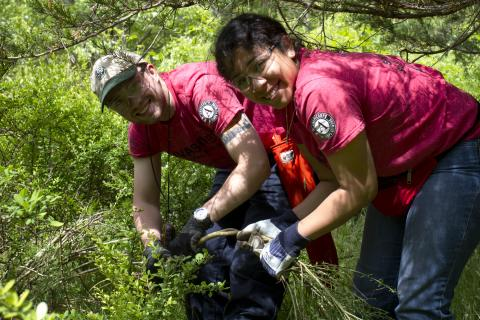 Two crew members pulling invasive plants