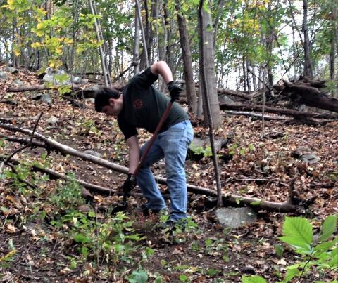 Volunteer digging out plants in the woods