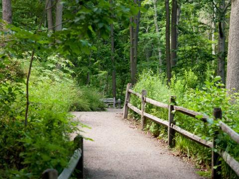 https://www.nybg.org/garden/forest/