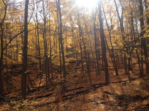 Fall view of wood with yellow leaves backlit by sun