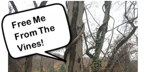 Vines climbing up a tree with a call out box saying Please save me from the vines!