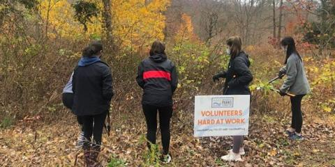 Four volunteers with their backs to us cutting shrubs with loppers. Sign says Volunteers Hard at Work.