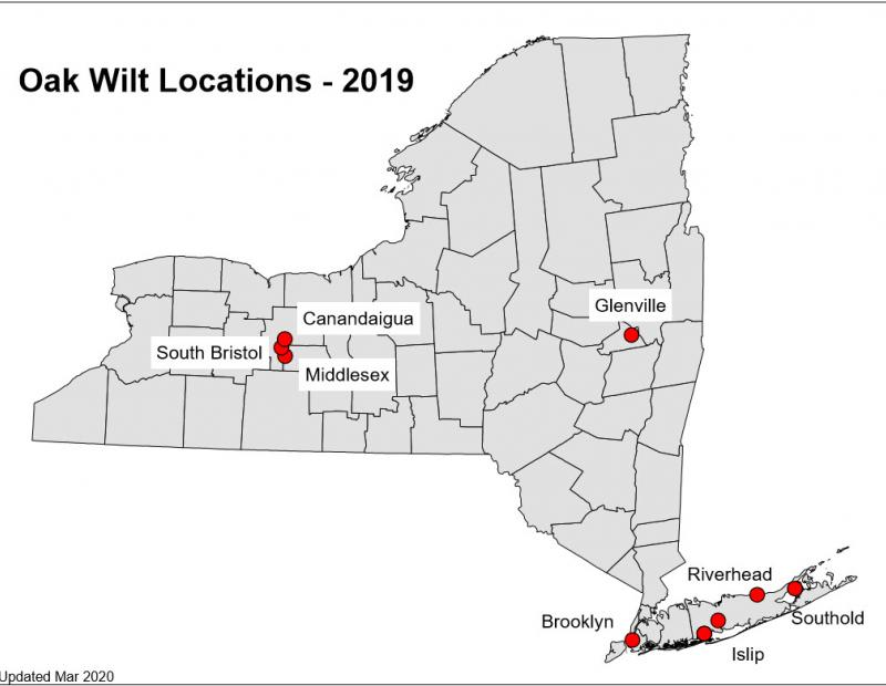 oak wilt locations